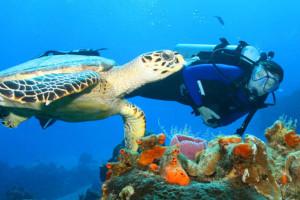 Кения - Подводный музей